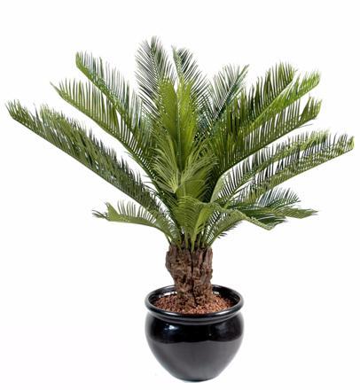 plante exterieur