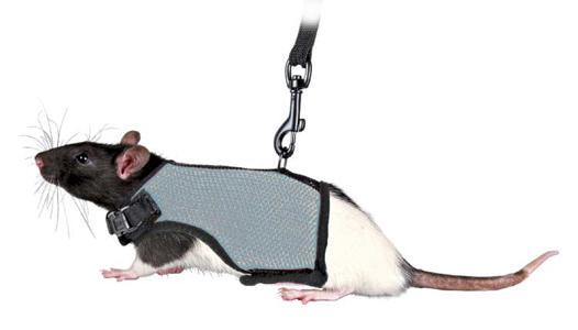 accessoire rat