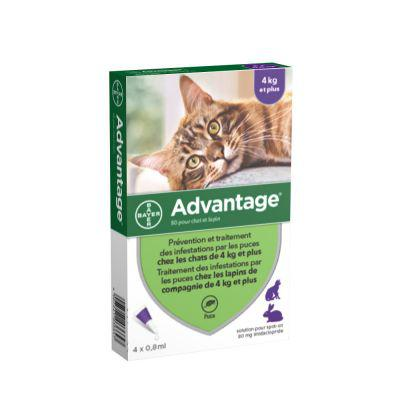advantage 80 pour chat