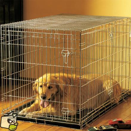 cage chien maison
