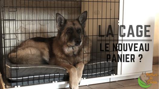 cage pour chien maison