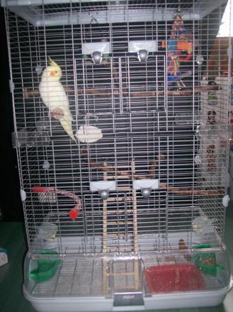 cage pour perruche calopsitte