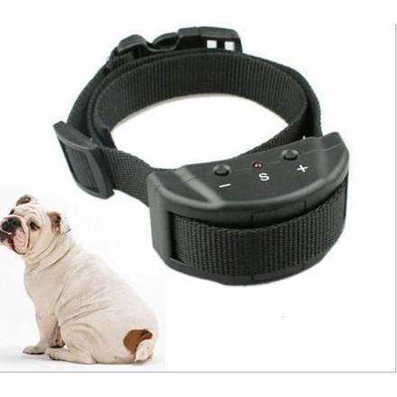 collier anti aboiement pour chien