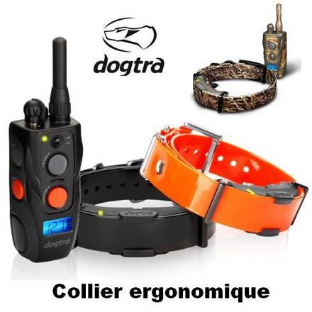 collier dressage pour chien