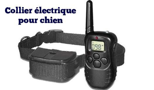 collier electrique pour chien