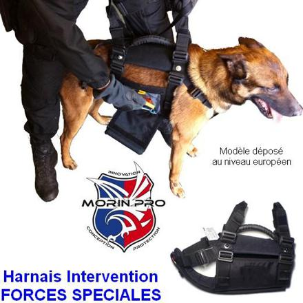 equipement chien