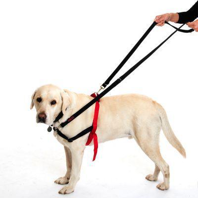 halti chien