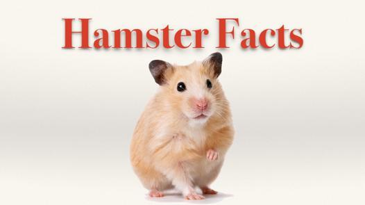 hamster com