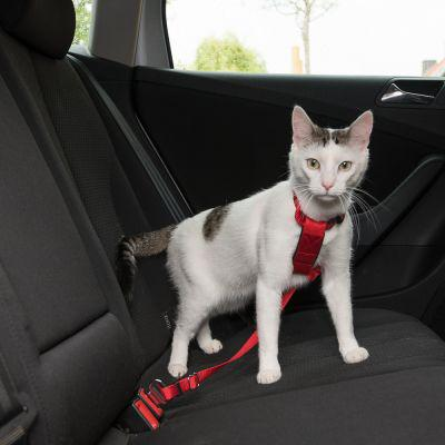 harnais chat voiture