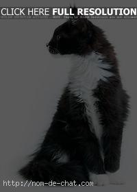 nom chat n
