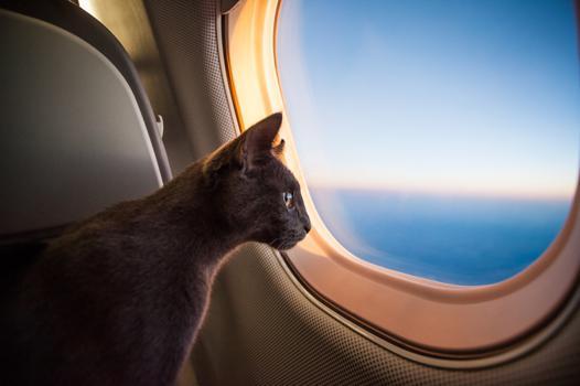 prendre l avion avec un chat