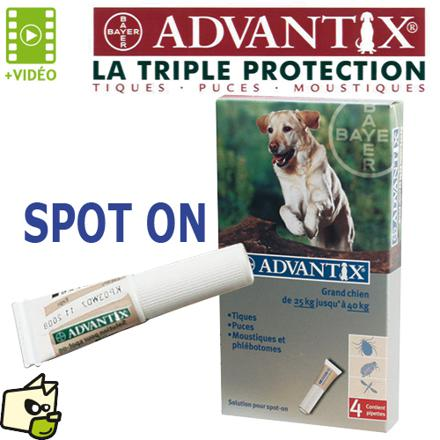produit anti puce chien