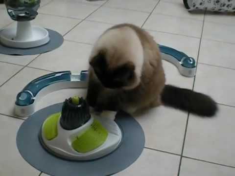 station de massage pour chat