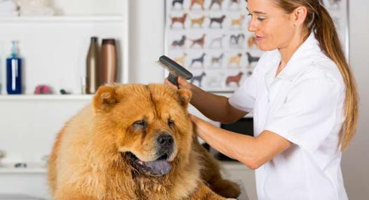 toilettage pour chien